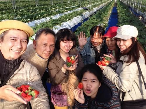 ichigo farm