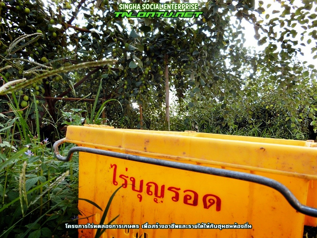 Social Enterprise ในประเทศไทย
